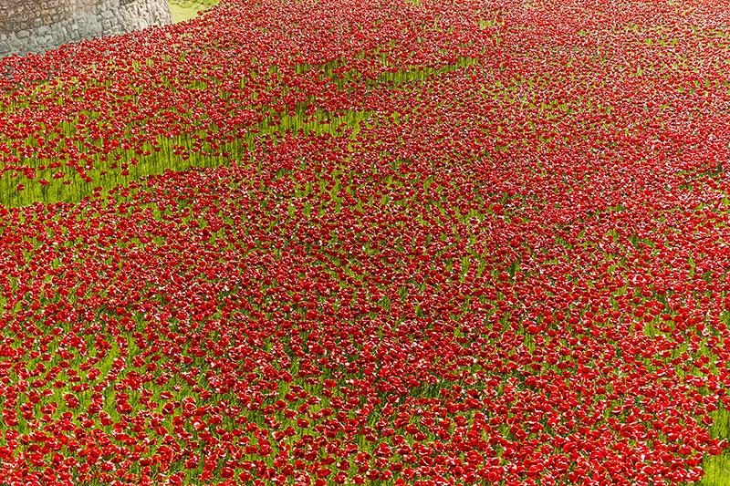 Poppies at The Tower of London. Image available from Simon Westwood of Fly-by-Light Photography.