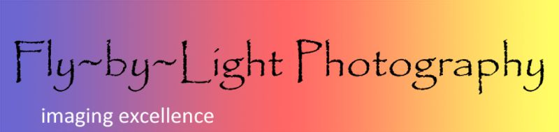 Fly-by-Light Photography Logo